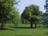 The orchard in may at Oatfield Country Cottages