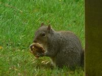 Squirrel at the farm in Forest of Dean
